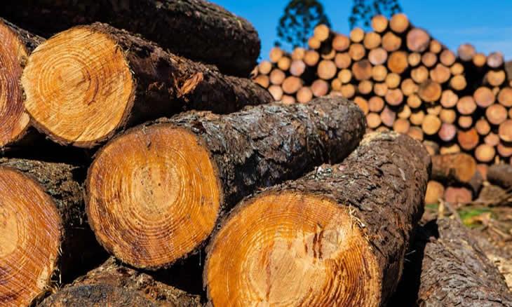 Província de Gaza perde 174 toneladas de madeira por dia